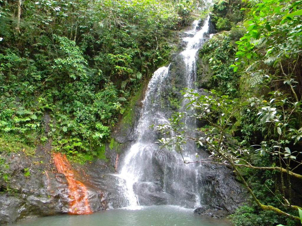 Tiger Fern Waterfall!